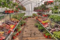 生长在一个园艺中心的植物在明尼苏达 免版税库存照片