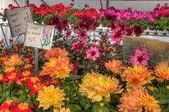 生长在一个园艺中心的植物在明尼苏达 库存图片