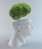 生长在一个抽象题头外面的结构树 免版税库存照片