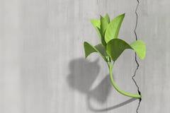 生长在一个混凝土墙上的一点3d植物 免版税库存照片