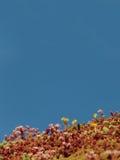 生长在一个现代大厦的屋顶的Sedum 库存图片