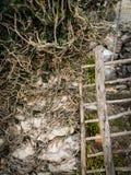 生长在一个石墙和一个老门上的常春藤 免版税图库摄影