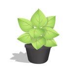 生长在一个罐的绿色植物有白色背景 免版税图库摄影