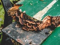 生长在一个长木凳外面的蘑菇 免版税库存照片