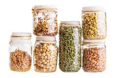 生长在一个玻璃瓶子的堆不同的发芽种子 免版税库存照片