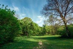 生长在一块森林沼地的落叶树在春天反对天空和云彩 免版税库存图片