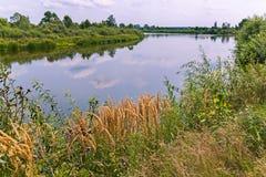 生长在一条宽河的河岸的美丽如画的自然的美丽的景色有冰河水表面的和 免版税图库摄影