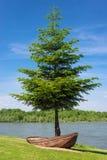 生长在一条老生锈的小船外面的树 在背景中一条流动的河和好的天空 免版税库存照片
