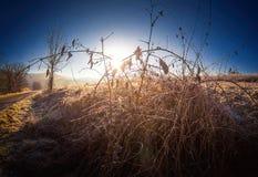 生长在一蓝天和sunshi前面的冬天的冷淡的植物 库存图片
