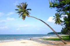 生长在与吹在明亮的天的风的海海滩旁边的弯曲的椰子树干 免版税库存照片