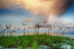 生长在与彩虹和云彩的海滩的海燕麦在背景中 免版税库存照片