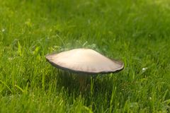 生长在与水滴的绿草-选择聚焦的蘑菇 库存图片