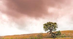 生长在与红色天空的一个岩石外面的唯一树 免版税库存图片