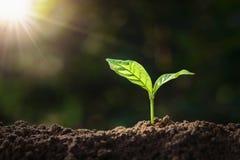 生长在与阳光的土壤的植物 eco地球日概念 库存图片