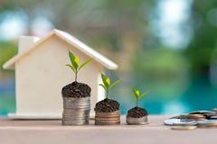 生长在储款硬币的植物 房地产事务的金钱硬币堆生长图表 免版税图库摄影