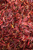 生长在内盖夫加利利的伯利恒的红色辣椒粉 免版税库存照片