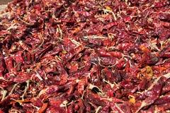 生长在内盖夫加利利的伯利恒的红色辣椒粉 免版税库存图片