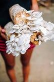 生长在农厂在有机生长在特别土壤的农厂新鲜的蘑菇的蘑菇耕种的蘑菇耕种 免版税图库摄影