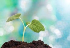 生长在土壤的一点植物 免版税图库摄影