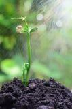 生长在土壤的结构树 免版税图库摄影