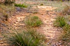 生长在土路的草 免版税库存照片
