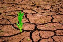 生长在地球的镇压外面的绿色植物 免版税库存图片