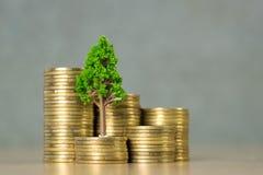 生长在堆的树金黄硬币、成长企业财务投资和公司的社会责任或者CSR实践和 免版税库存照片