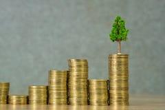 生长在堆的树金黄硬币、成长企业财务投资和公司的社会责任或者CSR实践和 免版税库存图片