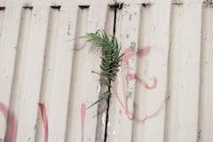 生长在墙壁之间的杂草 免版税图库摄影