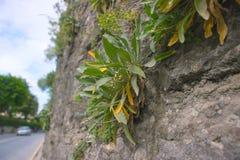 生长在墙壁的一点植物 免版税图库摄影