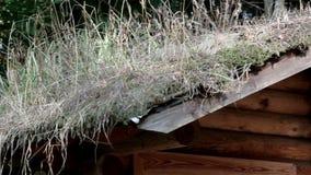 生长在客舱日志的屋顶的草 股票录像