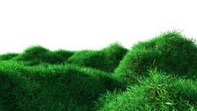 生长在小山的绿草 库存照片
