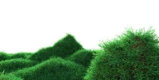 生长在小山的绿草 库存例证