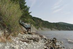 生长在岩石倾斜的杉木  免版税库存照片