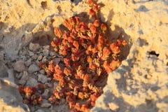 生长在岩石土壤的沙漠植物 免版税库存照片