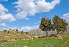 生长在岩石外面的两棵杜松树 图库摄影