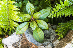 生长在岩石旁边的植物 库存照片
