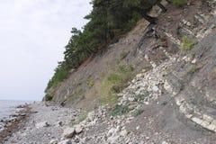 生长在岩石的倾斜的杉木由海 库存照片