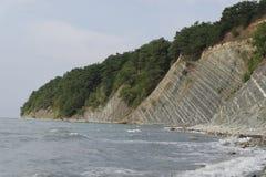 生长在岩石的倾斜的杉木由海 免版税库存图片