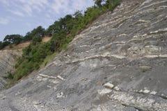 生长在岩石的倾斜的杉木由海 库存图片