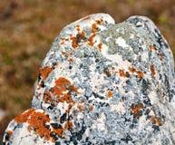 生长在岩石的地衣 免版税库存照片
