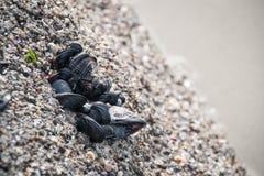 生长在岩石的壳在海滩 免版税库存照片