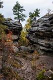 生长在岩石的杉木 库存图片