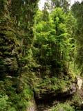 生长在岩石的树在峡谷 免版税库存照片