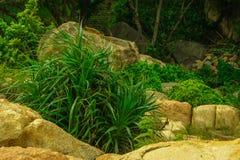 生长在岩石的芦荟 库存照片