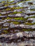 生长在岩石的青苔 库存图片