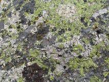 生长在岩石的青苔 免版税库存图片