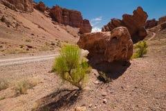 生长在峡谷的岩石中的沙漠植物 免版税库存图片