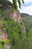 生长在峭壁边缘的森林 免版税库存照片