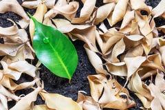 生长在干燥叶子中的绿色植物 对比概念 免版税库存图片